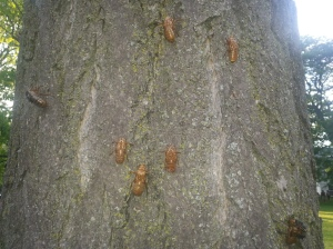 nymphs on a tree